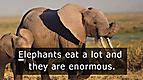 Discovery Education: Animal Alphabet