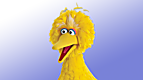 Sesame Street: What's in Big Bird's Nest