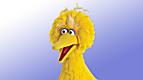 Sesame Street: What's in Big Bird's Nest