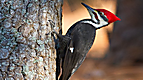 Wild Animal Baby Explorers: Bugs, Birds, Buddies