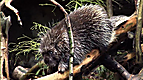 Wild Animal Baby Explorers: Hide & Seek