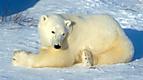 Wild Animal Baby Explorers: Snow Adventures