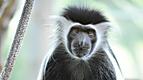 Wild Animal Baby Explorers: The Marvelous World of Monkeys