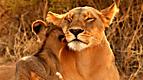 Wild Animal Baby Explorers: They