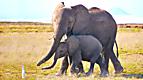 Wild Animal Baby Explorers: Moms are the Best!