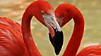 Wild Animal Baby Explorers: Feathery Friends