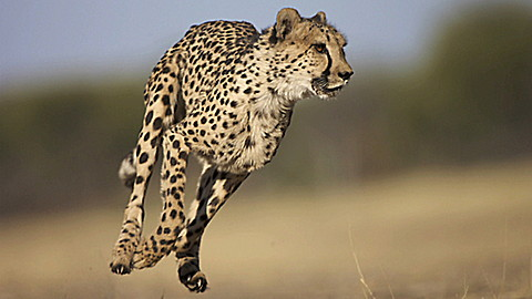 The Jeff Corwin Experience: Tanzania - Ecosystem in Motion